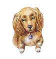 watercolor cocker spaniel dog vector image vector image