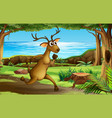 a deer running in forest vector image vector image