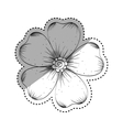 Beautiful flower in black and white vector image vector image