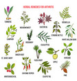 best herbal remedies for arthriris vector image vector image