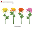 Chrysanthemum Flowers National Flower of Japan vector image vector image