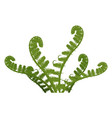 fern green leaves plant isolated on white vector image