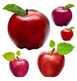 fresh red apple on a white background vector image