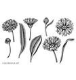 set hand drawn black and white calendula vector image vector image