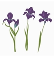 set three irises isolated on white background vector image