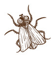 african insect tsetse fly isolated sketch flying vector image vector image
