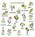 best anti-inflammatory herbs vector image