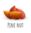pine nut icon cartoon style vector image