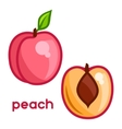 Stylized of fresh peach on white vector image