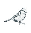 bird sketch with transparent background vector image