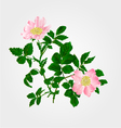 Eglantine twig with leaves and flowers vector image vector image