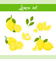fresh lemon fruits vector image vector image