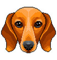 pixel dachshund dog portrait detailed isolated vector image vector image