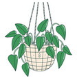 scindapsus funny plant character in a hanging pot vector image vector image