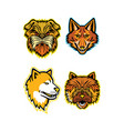 terriers and wolves mascot collection vector image