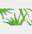aloe vera medicinal eco plant vector image vector image