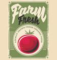 tomato farm vector image vector image