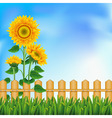 background with a field sunflowers and blue sky vector image vector image