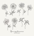 hand drawn peonies spring flowers set garden vector image vector image