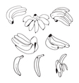 Set of hand drawn bananas doodle style vector image