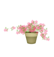 A Pink Flowering Plants in Flower Pot vector image vector image