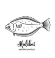 halibut vector image vector image