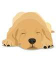sleepy labrador puppy vector image