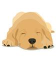 Sleepy labrador puppy