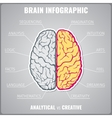 Brain left analytical and right creative vector image vector image