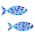 fish fish pair composition vector image