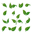 green tree and plant leaves icons isolated vector image vector image