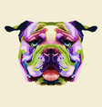 colorful english bulldog on pop art style vector image vector image