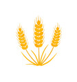 grain wheat icon on white vector image vector image