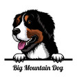 big mountain dog - dog breed color image vector image vector image
