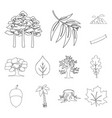 forest and nature outline icons in set collection vector image vector image