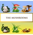 Icons of wild mushrooms and their growth vector image vector image