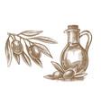 olives branch and a bottle olive oil sketch vector image vector image