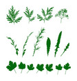 set green grasses wild plants isolated pattern vector image