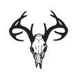 skull of deer vector image