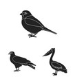 types of birds black icons in set collection for vector image vector image