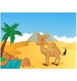 Cartoon camel with desert background vector image