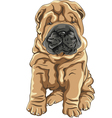 cute red Shar Pei dog puppy smiles vector image vector image