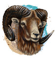 mountain sheep artistic color hand-drawn portra vector image vector image