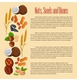 Nuts seeds and beans banner vector image vector image