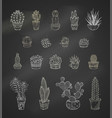 set of chalk cacti and succulents on blackboard vector image