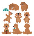 set of grizzly bears collection of cartoon brown vector image
