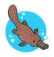 cartoon platypus vector image