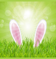 easter bunny ears nestled in grass vector image vector image