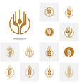 set of wheat luxury grain and bread labels nature vector image vector image