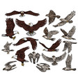 birds of prey predatory eagle and hawk falcons vector image